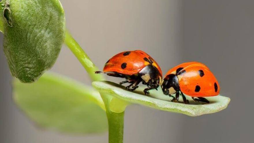 Los insectos terrestres bajan, los acuáticos suben