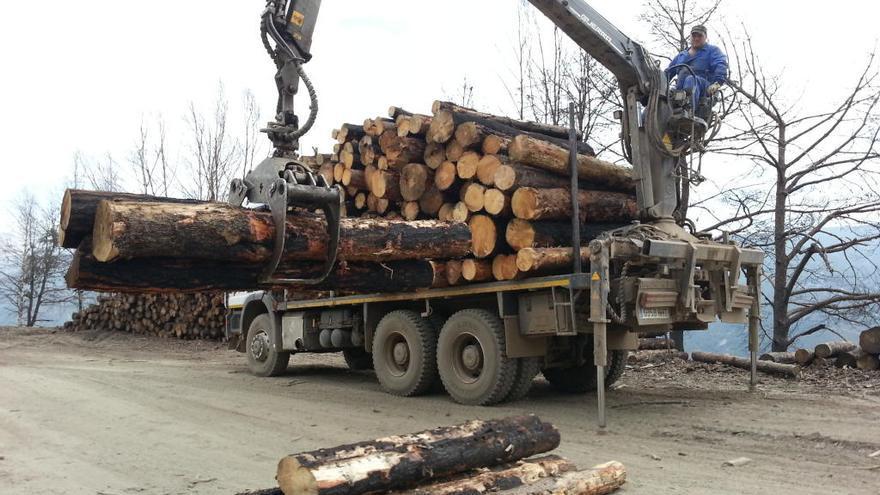 Asturias, a la cabeza en subastas de madera, pero cae en volumen y en los precios de venta