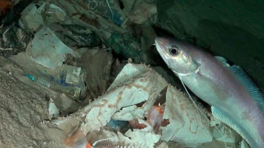 La organización Oceana alerta del aumento de contaminación en los mares