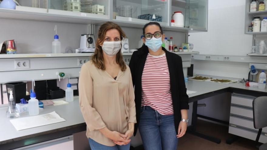 La UCO busca las encinas más tolerantes a la sequía