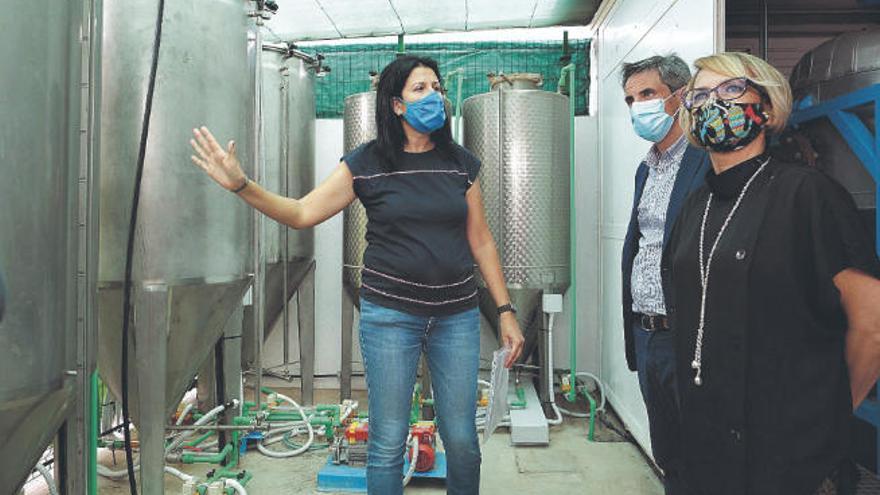 Una empresa tinerfeña estudia producir en las Islas biocombustible a gran escala