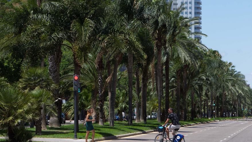 ¿Cuántas palmeras han caído este año víctimas del picudo rojo?