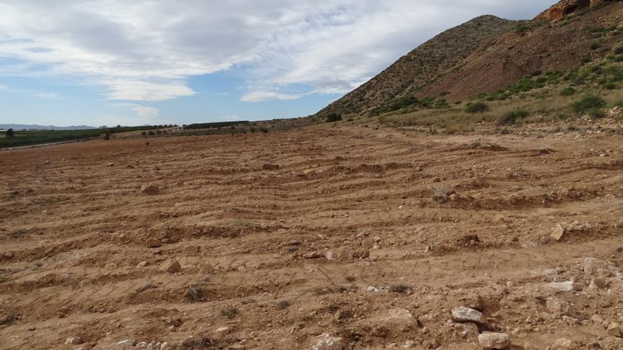 Anse denuncia una nueva roturación en el Cabezo Gordo de Torre Pacheco