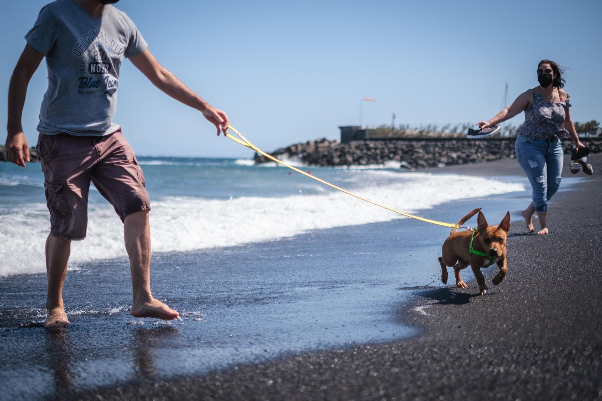 Playa del Puertito de Güímar, la única habilitada en la Isla junto a la de El Confital, en Granadilla, donde se permite el baño de perros