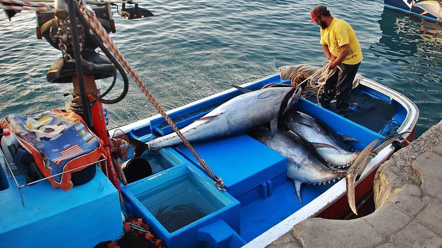 La flota pesquera de las Islas cierra  la peor zafra de atún de la historia