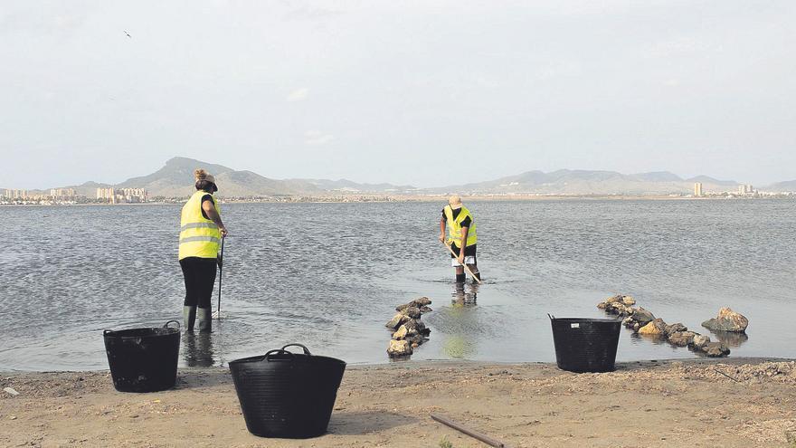 La biomasa acumulada en el Mar Menor aumenta las posibilidades de un nuevo episodio de anoxia