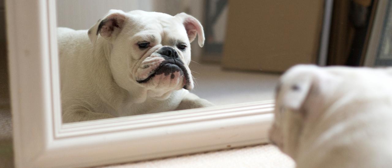 Los perros pueden tener conciencia de su propio cuerpo