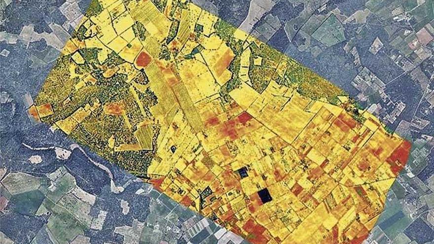 Agricultura investiga la Xylella fastidiosa mediante imágenes aéreas