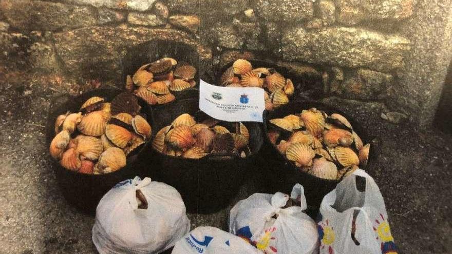 Ocho detenidos y otros 44 investigados por la extracción y venta ilegal de vieira de Ferrol