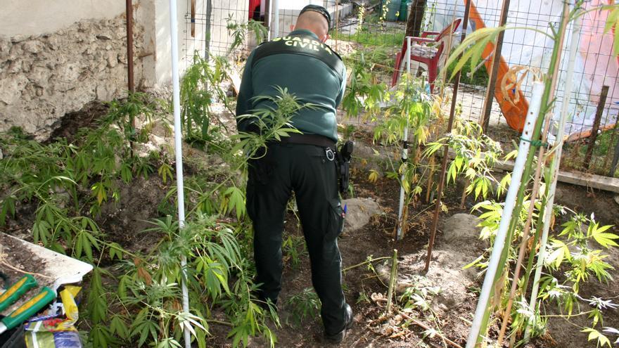 Desarticulado un laboratorio y un punto de venta de cannabis en Segovia