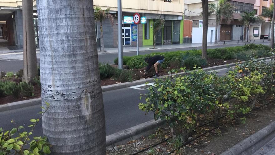 Pillado arrancando plantas en la zona ajardinada de la calle Venegas