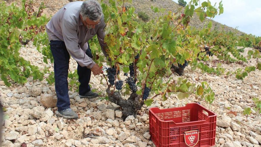 Bocopa, el vino que sabe a Alicante