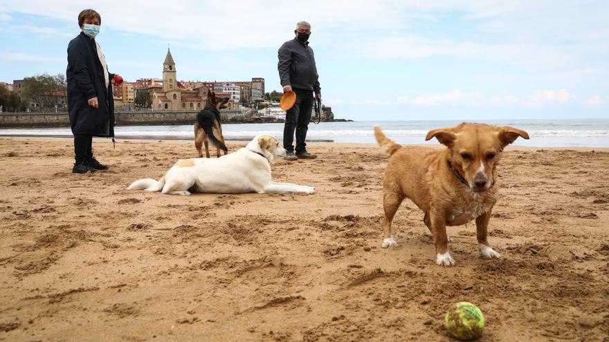 Los perros disfrutan de su última jornada en San Lorenzo ante el inicio de la temporada de baños