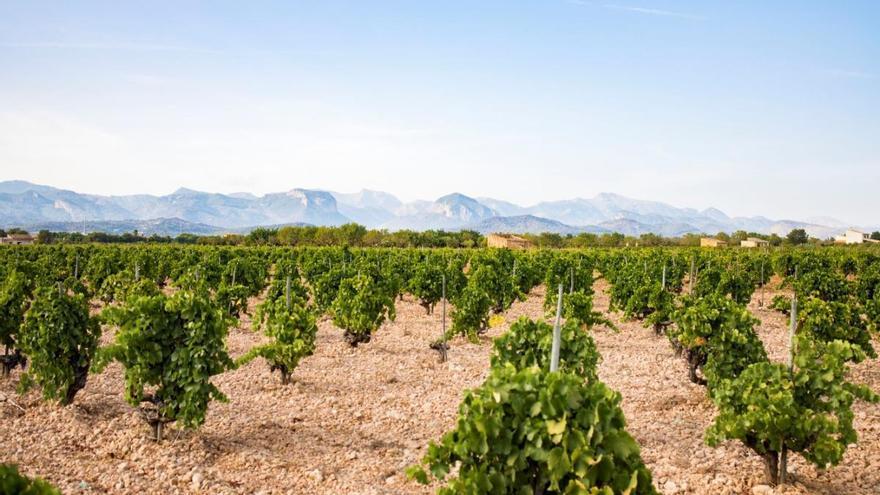 Los retos actuales del vino mallorquín