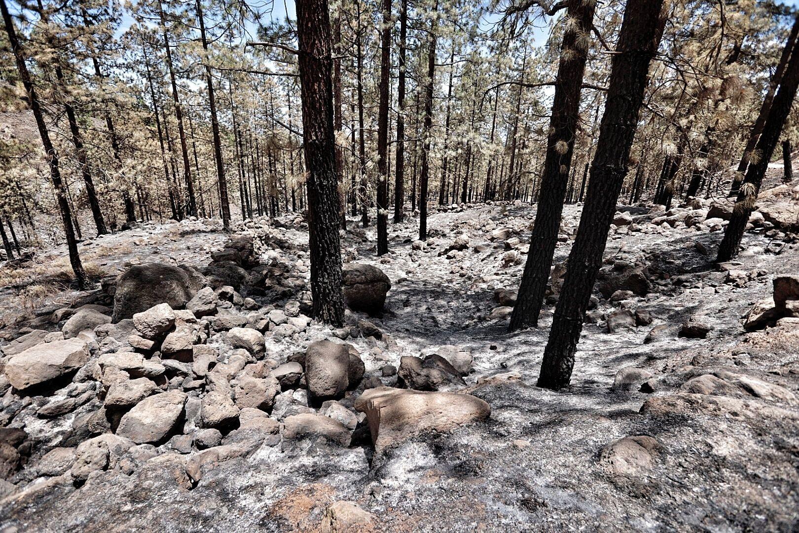 Incendio de Arico