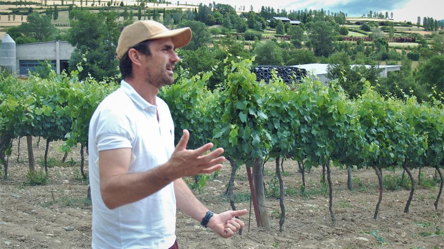 Torre del Veguer amplia les vinyes de Bolvir amb varietats del Pirineu
