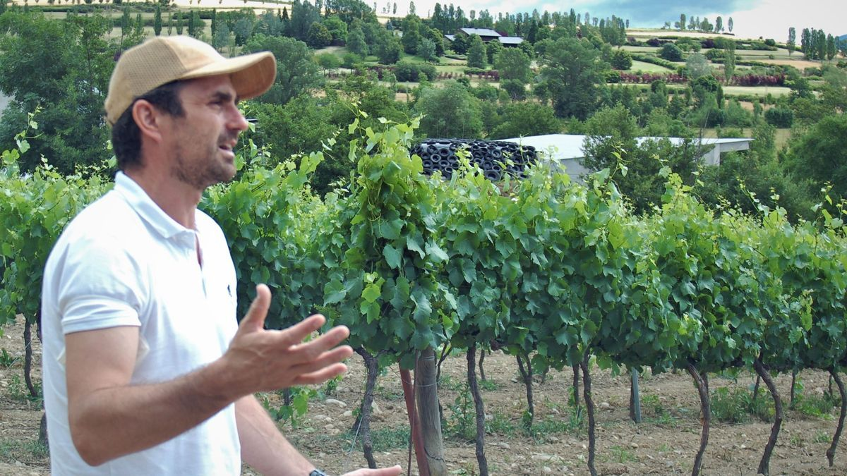 El responsable del celler Torre del Veguer, Joaquim Gay de Montellà, a les vinyes