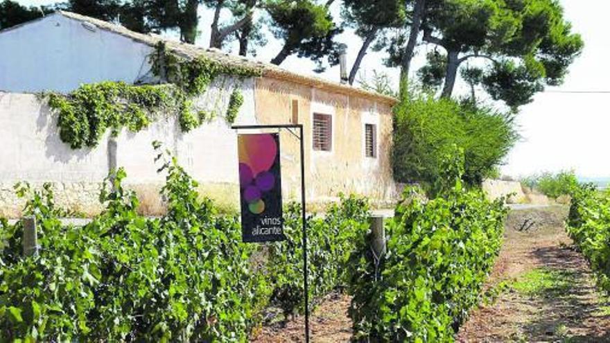 Aspa premia a los vinos de Alicante