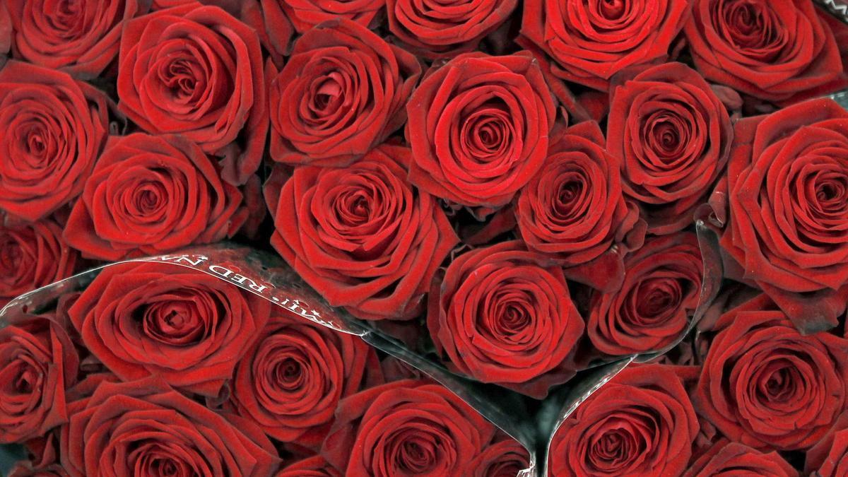 Varios ramos de rosas rojas.