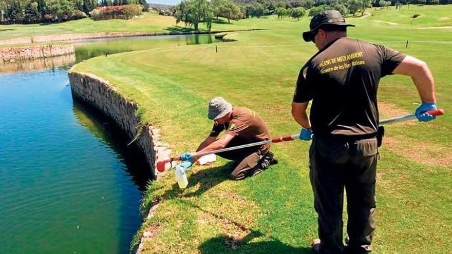 Illegale Bewässerung: Mallorcas Golfplätze in Erklärungsnot