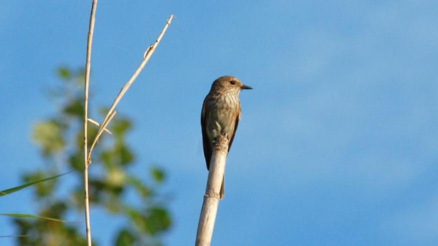 El río Mijares, destino de descanso de miles de aves migratorias