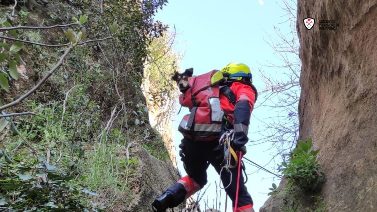 Bomberos del Consorcio Provincial rescatan a un perro atrapado en una cascada