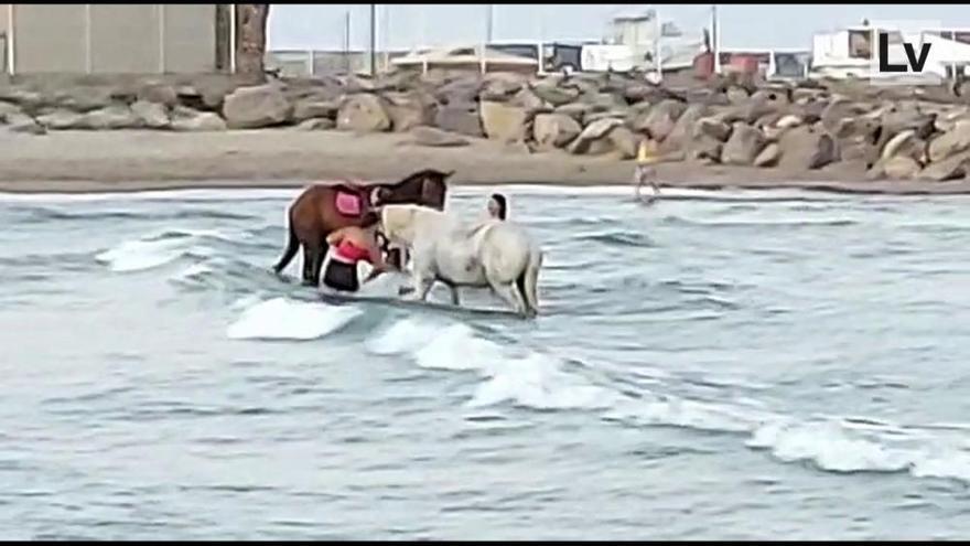 Baño de caballos en la playa para perros en Canet