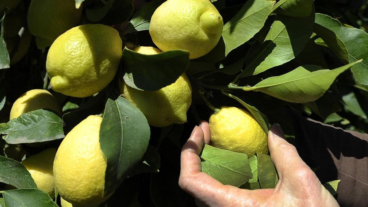 Cómo beneficia el limón a tu piel