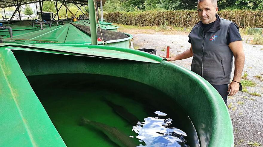 La cuenca Narcea-Nalón cierra la temporada del salmón con un descenso de capturas