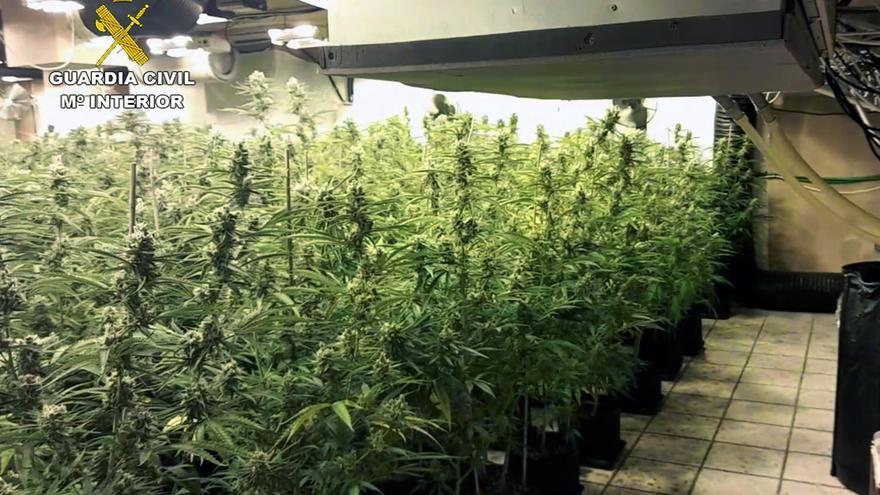 Desmantelan un invernadero con 900 plantas de marihuana en un chalet de Molina