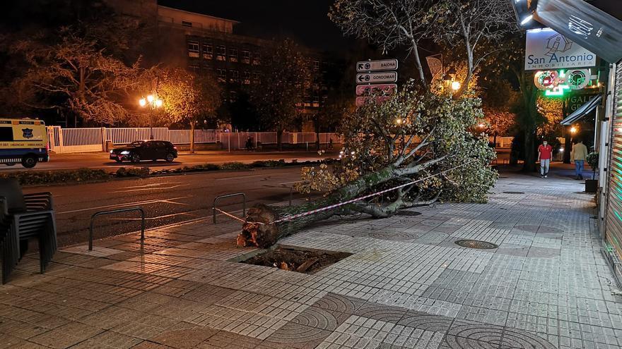 Vientos de hasta 90 km/h provocan la caída de varios árboles en Vigo