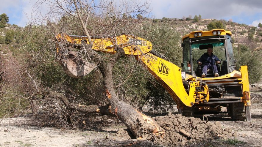El Gobierno le enmienda la plana a Mireia Mollà por un falso caso de Xylella