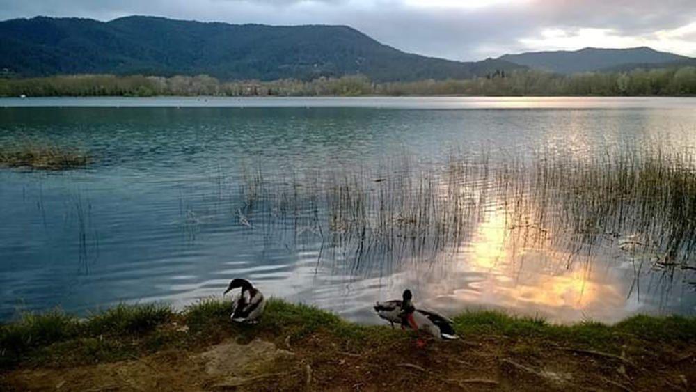 Ànecs. Capvespre a l'estany de Banyoles, on podem veure que el sol comença a marxar i a deixar pas lliure a la nit. Moment de relaxació total per a tothom, i per als ànec també.