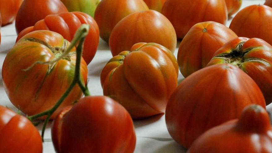 Cata de tomate: de la tierra  al paladar