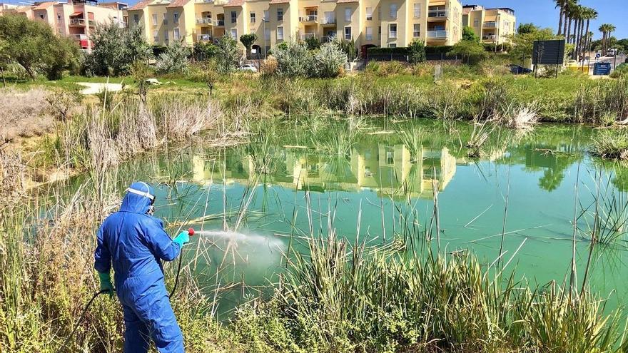 El virus del Nilo Occidental en España: el gran aliado del cambio climático