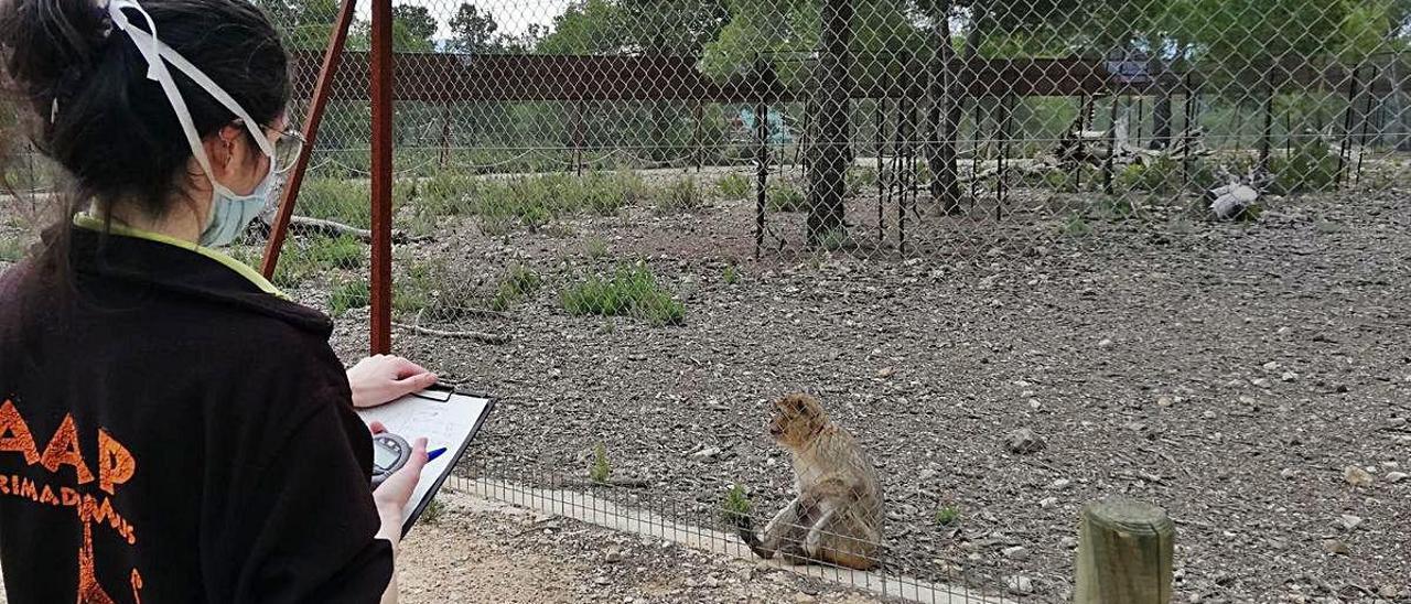 Confinados con felinos y primates