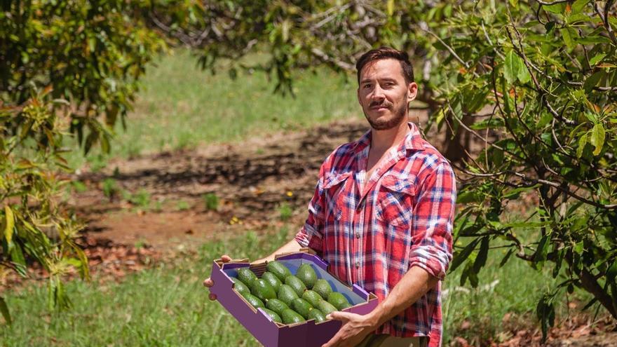 Sipcam, el cuidado agrícola ideal para los cultivos de aguacate y olivar en España
