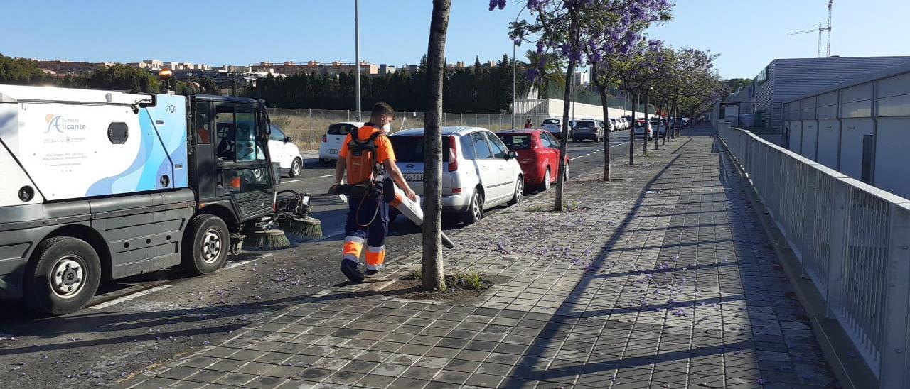 Un operario limpiando las flores caídas sobre las aceras