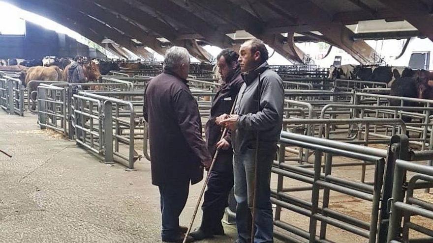"""Recelo en el mercado de ganado de Siero ante los tratos online: """"No son coches"""""""