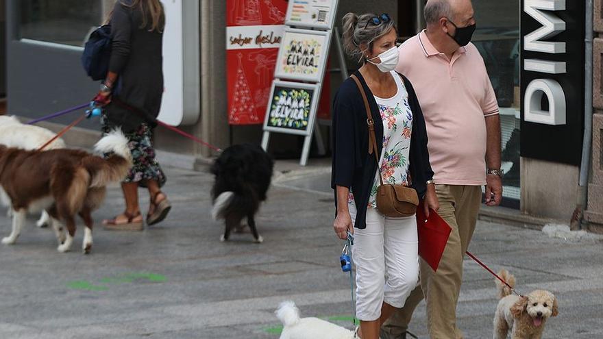 Los perros como posible barrera contra el covid-19