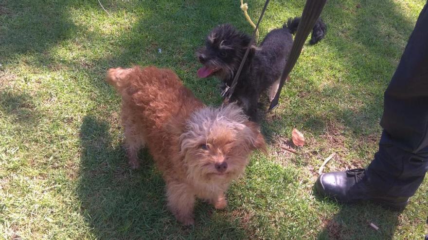 La Policía Local rescata a dos perros que estaban atados a un banco en el parque Lo Morant de Alicante