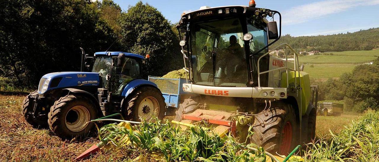Trabajos de ensilado de maíz en la comarca del Deza.