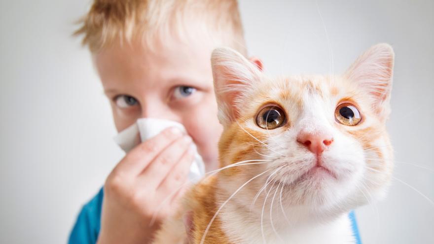 ¿Por qué los gatos causan alergias?