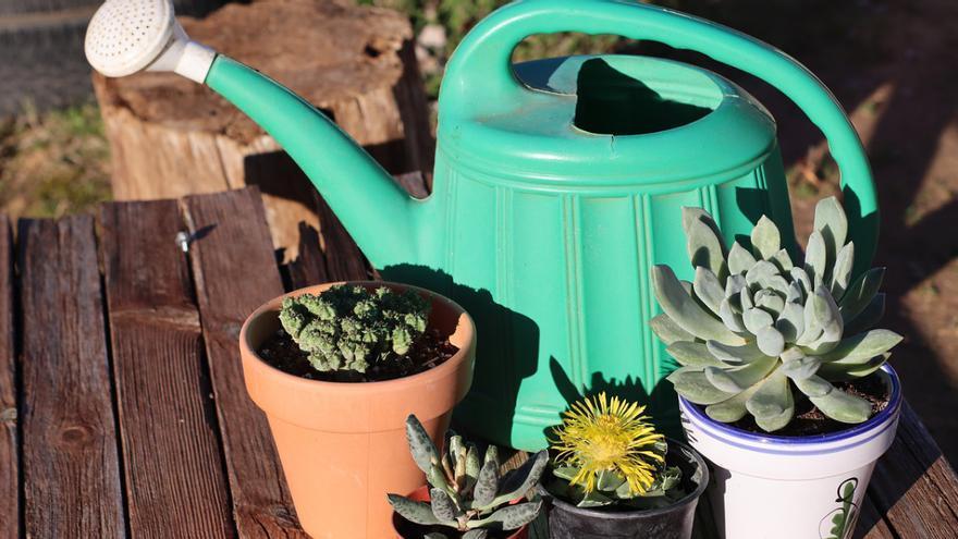 ¿Cuándo regar las plantas que están al sol?