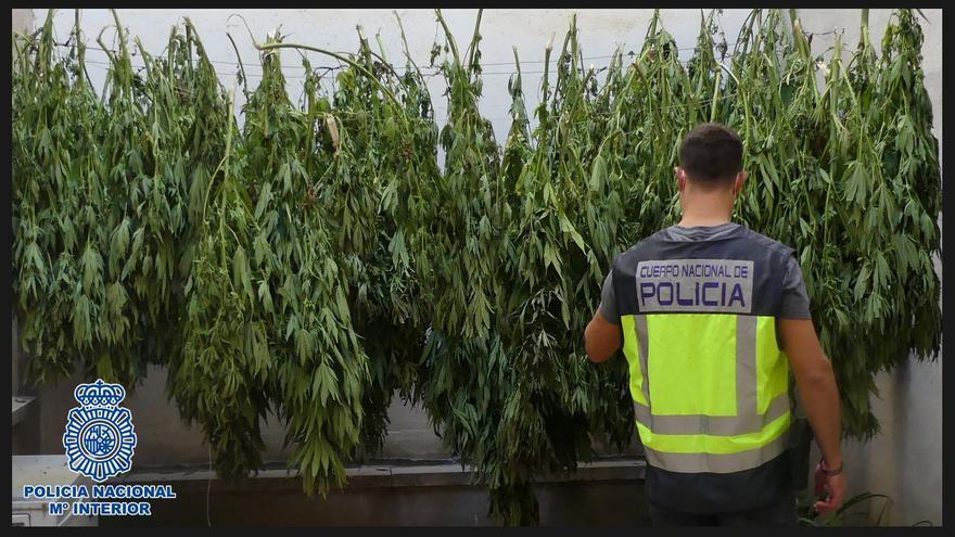 Intervenidos 100 kilos de marihuana en Calatayud en los últimos 10 días