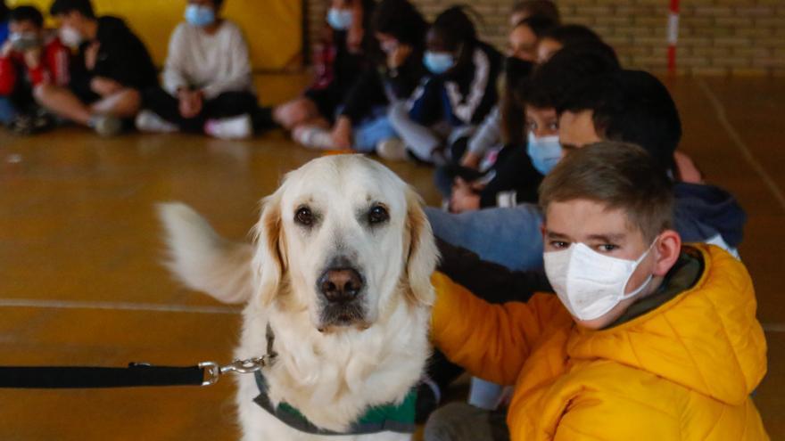 La conmovedora historia de Tom: de estar abandonado a ser un perro de terapia
