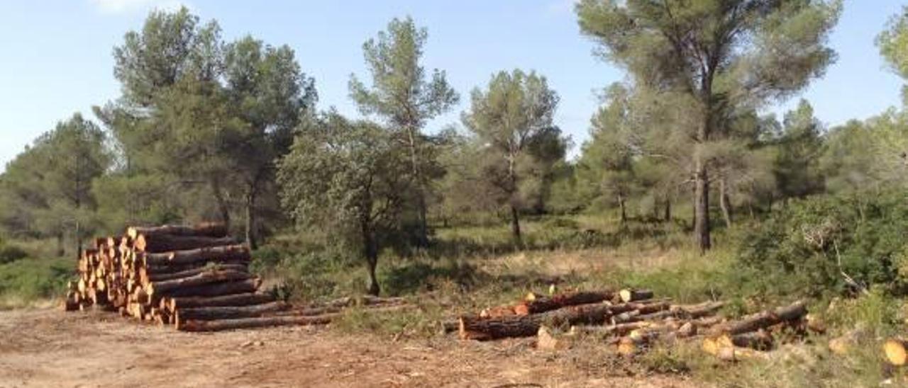 Enguera subasta  8.000 toneladas de biomasa por 730.000 euros durante 14 años