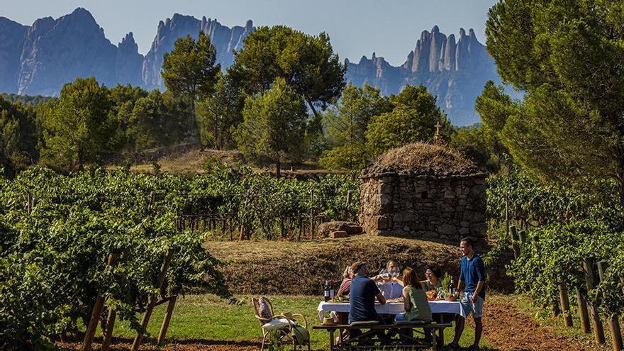 Un reclam per al curs que ve: el cicle d'olis d'oliva i vins de Vedruna Artés