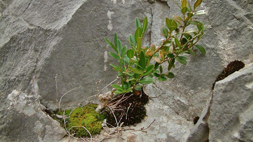 Aportació manresana per saber com el món vegetal va conquerir la terra ferma