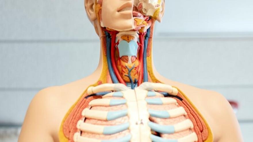 Los expertos estiman que este año se diagnosticarán 8.188 cánceres orales en España